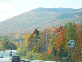 Foliage in Vermont by Champineography