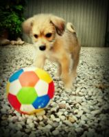 I want the ball by LeRougeLeNoir