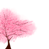 cherry blossom by MissingOne123