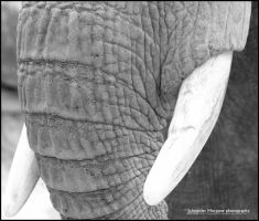 Trunk and Teeth by MorganeS-Photographe