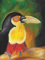 Tucan. by punicorn