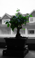 Bonsai by k4muii