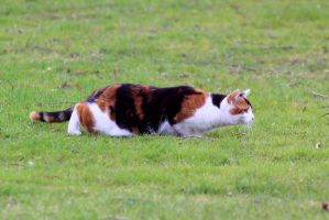 Feline Up Rising by pagan-live-style