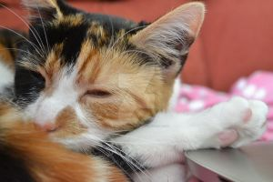 Calico Dreams 2 by Spiremagus-Esquire
