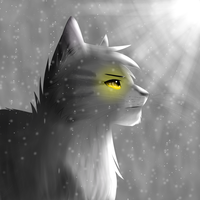 Graystripe by Starburst565