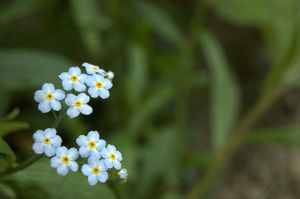 forgetmenot by alexever