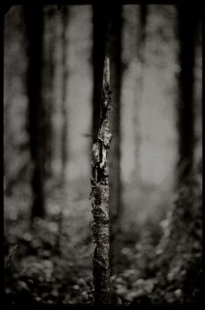 Fav wood by afewimages