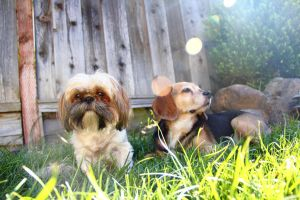Dogs In The Yard by tordavis