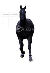Black Warmblood Precut 3 by s-uperflu0us