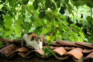The Cat On The Roof by weedenstein