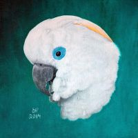 Blue-eyed cockatoo by shanskala