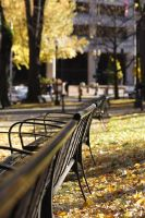 Deserted Bench by designcurve