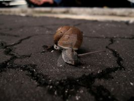 Snail by geshorty34