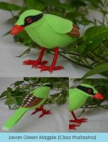 Javan Green Magpie by Animus-Panthera