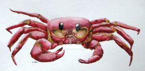 Red Spirit Crab by RamonaQ