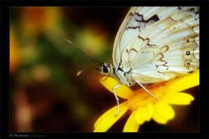 Fly For Beauty by gilad