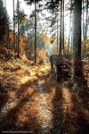 Journey through the Woods by chamathe