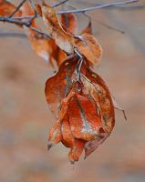 Autumn Leftovers by Tailgun2009