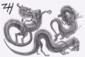 Chinese Dragon Sketches 2 by ZoeHildebrand-R