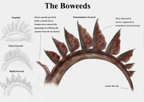 REP: The boweeds by Ramul