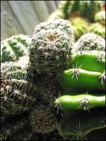 Cactus Revisited by CandaceIsVampire