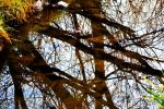 Tree Reflections on the Creek by Delta406