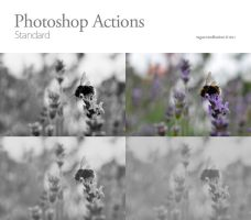 Photoshop Actions 01 by vaguerecollection