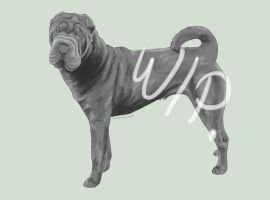 Work In progress - Shar-Pei by HauntedArea
