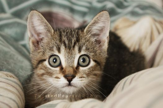 Mischievous Kitty. by TwistedHearts
