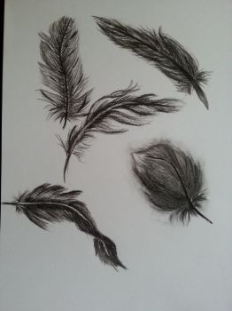 Charcoal Feathers by Bannakoot