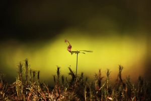 The beginning of a new life by DeingeL
