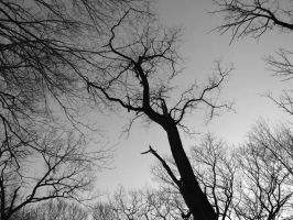 Lonely Neuron by olsons39
