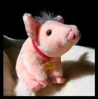 Babe Pig Plush by The-Toy-Chest