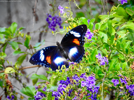 Butterfly with flowers by Mike-Kossi