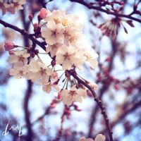 Spring time by Swann2501