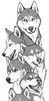 Snow dogs - sketch by Anisis