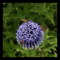 Three Flies and a Thistle by Bogbrush