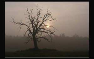 The dead oak tree once again by jchanders