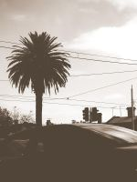 Palm Tree by AussiePrideForever
