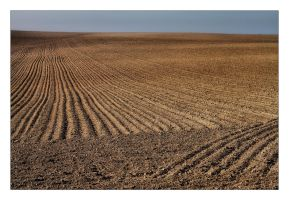 Ploughed and Tilled by Bogbrush