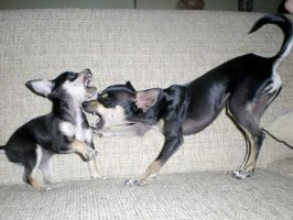 Dog fight by VanessaLake