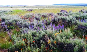 Color and Sage by LandOstock