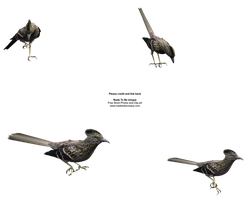 3d Roadrunner FREE STOCK by madetobeunique