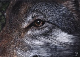 Wolf's eye view by Carolyne