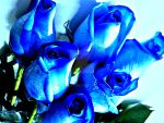 blue-roses-to TERESA by YOKOKY