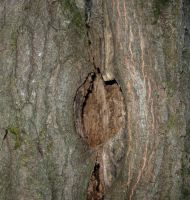114 - tree hole by WCat-stock