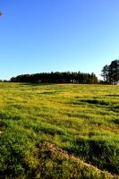 Meadow by AmbitiousArtisan