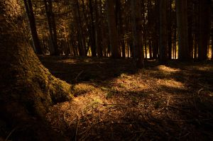 Woodlands in the Evening Sun by 10jacpe