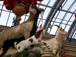 Year of the Goat by MollyMcMolly