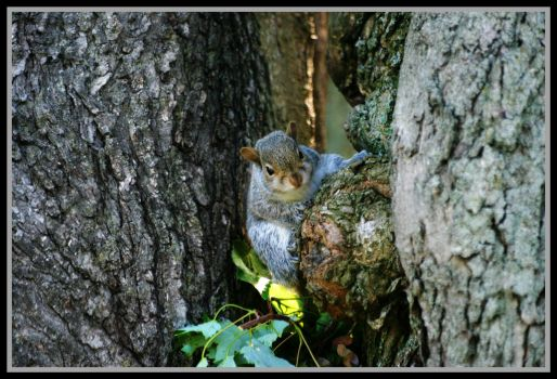 Squirrel Peeking Out by MissNioniel